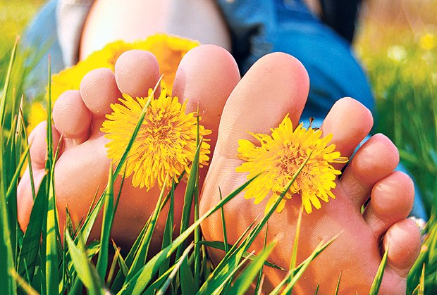 maslacak-trava-stopala
