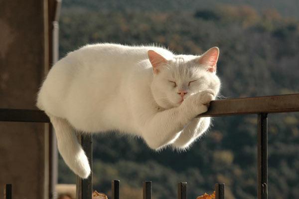 Biomimetička-mimikrija-mačka