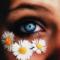 Možemo li videti auru cveće