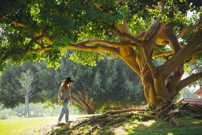 Možemo li videti auru drvo