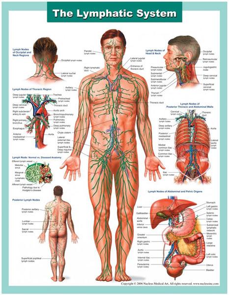 Telo-limfni-sistem