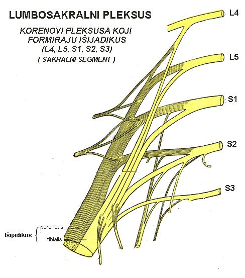 Išijas-nerv
