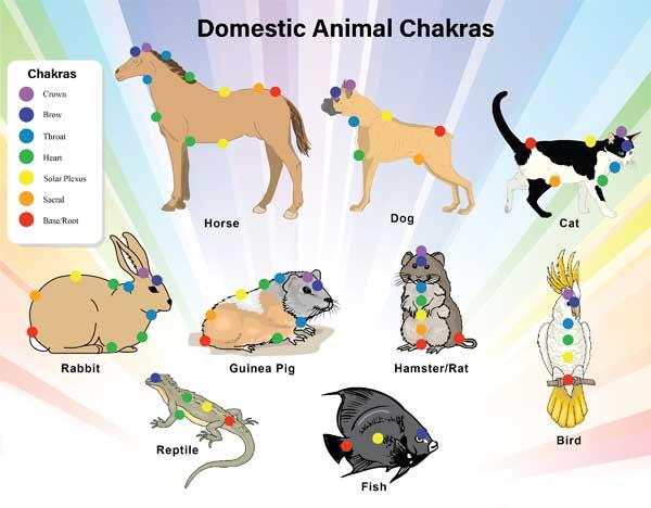 Životinje i čakre
