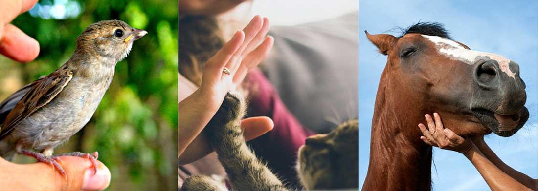 Životinje, Reiki tretman
