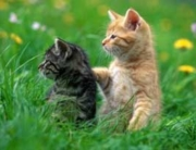 Životinje i reiki terapija
