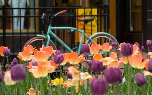 Proleće...