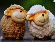ovčice