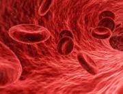 Imunološki sistem krv