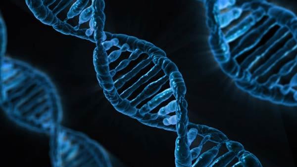 DNK, autoimune bolesti